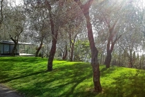 camping-gardasee-brenzone-sul-garda-le-maior-stelplatz-010