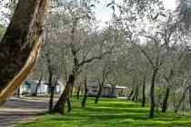 camping-gardasee-brenzone-sul-garda-le-maior-stelplatz-014